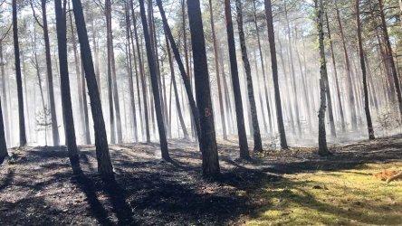 Pożar lasu w Trzech Morgach