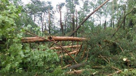 Połamane drzewa i zerwane linie energetyczne