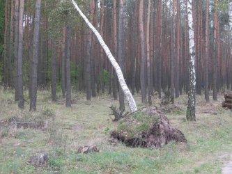 Co z drzewami połamanymi w trakcie wichury?