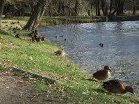 Si³ownia i plac zabaw w parku Belzackim