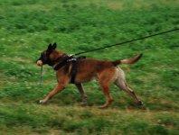 Policyjny pies odnalaz³ ch³opaka, który zamierza³ pope³niæ samobójstwo