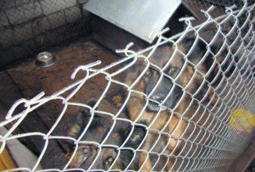 Psy nadal w złych warunkach. Co dalej z hodowlą na Jagodowej?