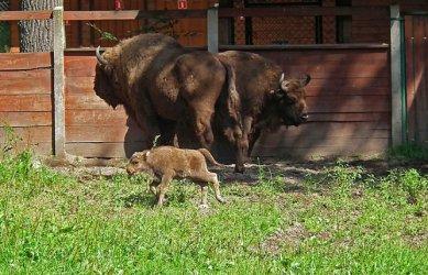 16-kilogramowy noworodek w Smardzewicach