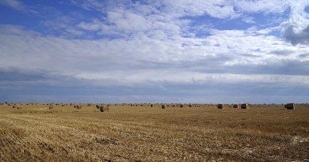 Skosili zboże z cudzego pola i zniknęli