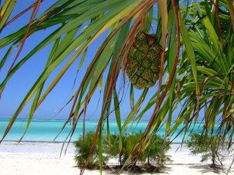 Ach, na plażach, być na plażach Zanzibaru - Wybierz się na wczasy all inclusive!