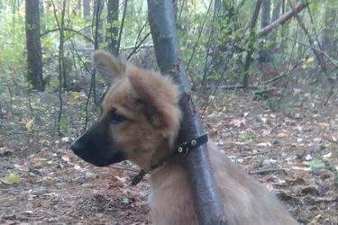 Przywi±za³ psa do drzewa i porzuci³...
