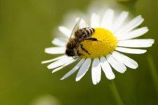 Tomaszów Mazowiecki zadba o pszczoły