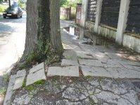 Drzewa rozsadzaj± chodnik