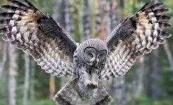 Dzikie ptactwo na Placu Pofranciszkañskim