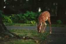 Uwaga na dzikie zwierzêta!