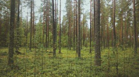 Co zrobić, kiedy zgubisz się w lesie?
