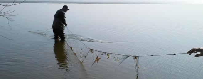 240 metrów sieci, a w niej 70 kg szczupaków, poza tym leszcze, p³ocie i liny - to efekt ob³awy Stra¿y Rybackiej na k³usowników grasuj±cych po Zalewie Sulejowskim.