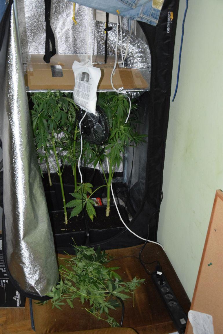 Domowa plantacja marihuany na bełchatowskim blokowisku