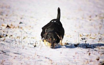 Zimą pamiętajmy o zwierzętach