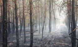 Przez upały sytuacja w lasach naszego regionu bardzo trudna