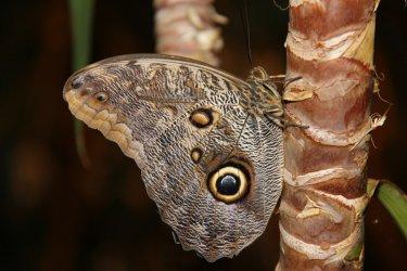 Wystawa motyli egzotycznych w Piotrkowie