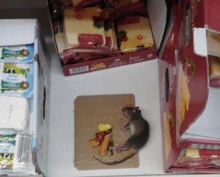 Szczur przy serze w Biedronce