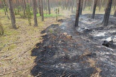 Pożar lasu w gminie Sulejów