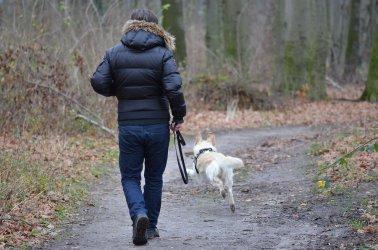 Spacer z psem bez smyczy może nas słono kosztować