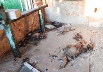 Zmasakrowane zwłoki psa w opuszczonym budynku