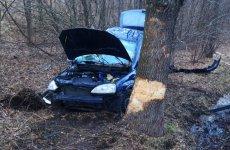 Kierowca opla uderzył w drzewo, bo na jezdnię wyskoczył dzik