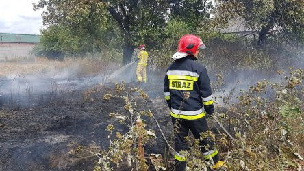 Kolejny pożar trawy w naszym regionie