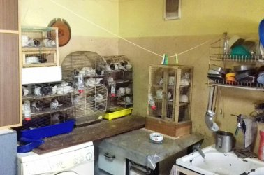 Ogromna kolonia szczurów w kawalerce w Piotrkowie