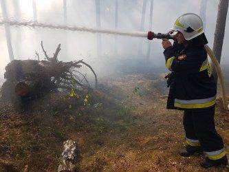 Pożar lasu w Swolszewicach Dużych