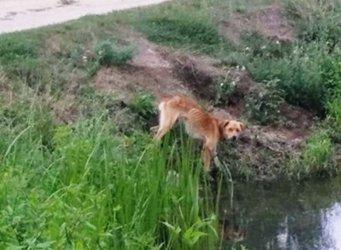 Głodził psa, potem go zabił