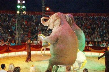 Czy Piotrków powinien sprzeciwić się wykorzystywaniu zwierząt w cyrkach?