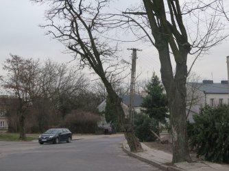 Niebezpiecznie pochylone drzewo zniknie z ul. 1 maja w Piotrkowie?