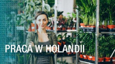 Praca w Holandii – Czy warto wyjechać?