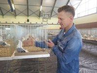 Wystawa gołębi rasowych w Moszczenicy