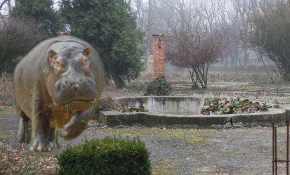 W Piotrkowie zamieszka hipopotam. Miasto utworzy ogród zoologiczny
