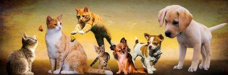 Jak pomóc zwierzętom przetrwać Sylwestra?
