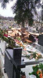 Awantura o drzewo na cmentarzu