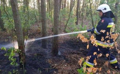 Rośnie zagrożenie pożarowe. Czy konieczny będzie zakaz wstępu do lasów?