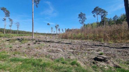 Czy lasom w naszym regionie grozi masowa wycinka?
