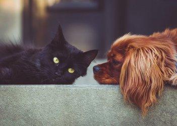 W czasie epidemii nadal możesz adoptować przyjaciela