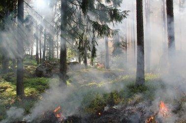 Najwyższy stopień zagrożenia pożarowego w lasach; uważajmy podczas spacerów