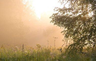 Silna mgła w nocy w Łódzkiem