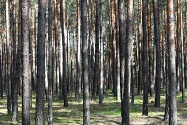 Lasy Państwowe: od 1 maja w każdym nadleśnictwie specjalne obszary do nocowania na dziko