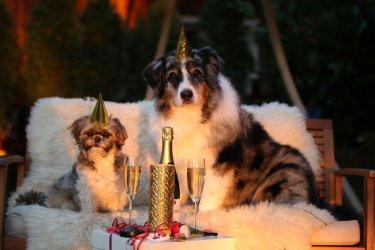 Jak pomóc swojemu psu przetrwać Sylwestra?
