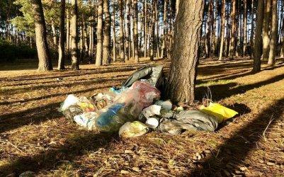 Będzie więcej kamer w lasach. To bat na śmieciarzy, złodziei drewna i kłusowników