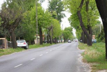 Czy przydrożne drzewa zabijają kierowców?
