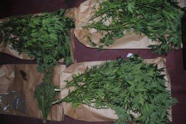 Prawie 0,5 kilograma marihuany ukryte w pomidorach