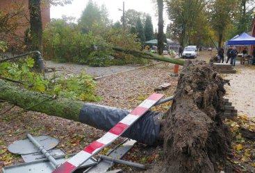 Ksawery wyrywał drzewa z korzeniami [VIDEO]