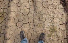 Na kontach rolników już ponad 150 mln zł