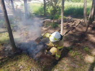 Dzieci zapobiegły pożarowi lasu
