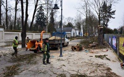 Posadzą drzewa na Cmentarnej